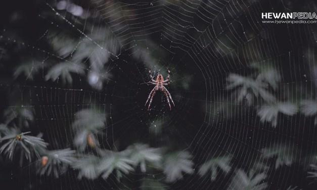 13 Arti Mimpi Bertemu Laba-laba menurut Islam dan Primbon