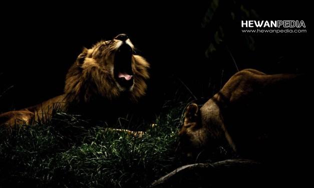 20 Arti Mimpi Bertemu Singa Menurut Primbon Jawa dan Islam
