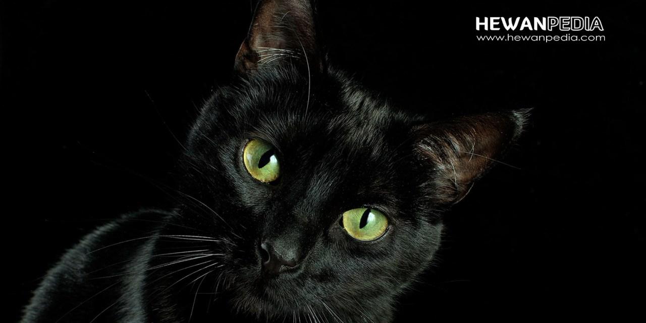 12 Arti Mimpi Kucing menurut Primbon Jawa dan Islam