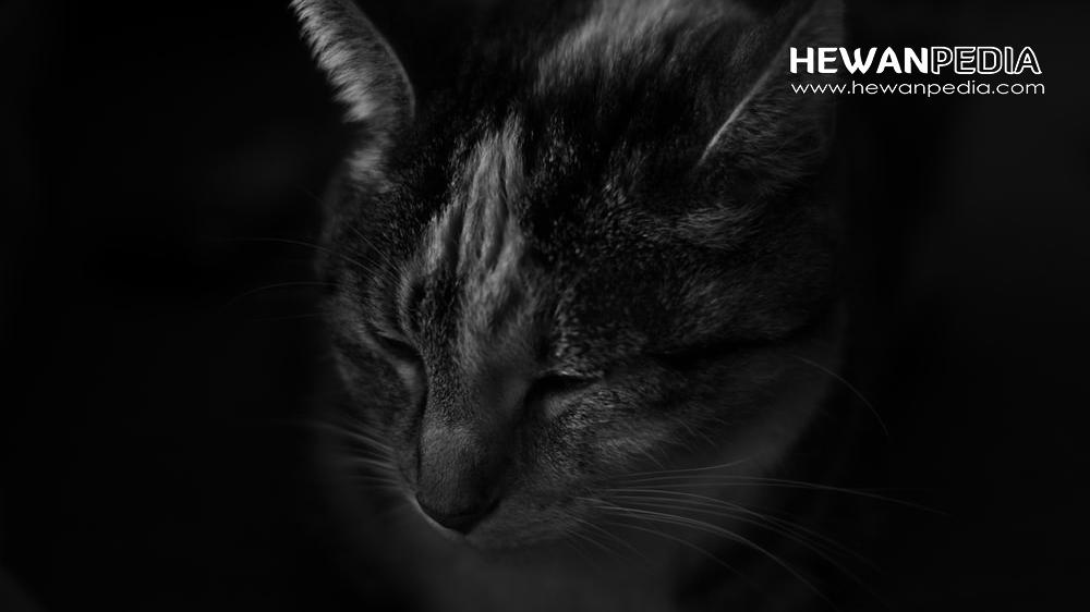 6 Mitos Mengenai Kucing Menurut Primbon dan Budaya Indonesia