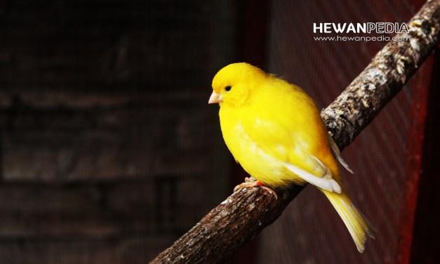12 Arti Mimpi Burung Kenari menurut Primbon dan Pakar Mimpi