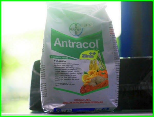 fungisida antracol, fungisida sistemik, fungisida adalah, fungisida untuk padi bunting, fungisida amistartop, fungisida score, fungisida dithane, fungisida alami, fungisida organik, fungisida terbaik untuk padi, fungisida filia, fungisida nativo
