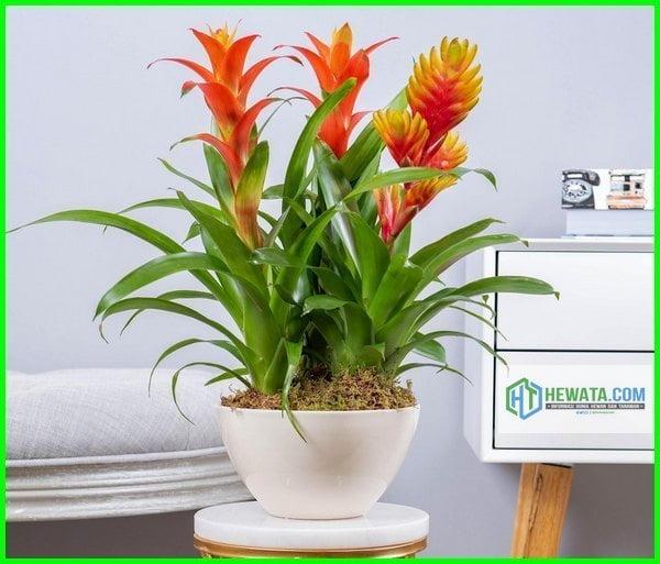 tanaman di dalam ruangan tanpa sinar matahari, tanaman yang ditempatkan di dalam ruangan kantor adalah, tanaman dalam ruangan minim cahaya, tanaman hias dalam ruangan tanpa sinar matahari, tanaman hias dalam ruangan untuk membersihkan udara, jenis tanaman dalam ruangan untuk kesehatan, tanaman untuk dalam ruangan kantor, tanaman dalam ruangan tanpa sinar matahari, tanaman yang cocok dalam ruangan