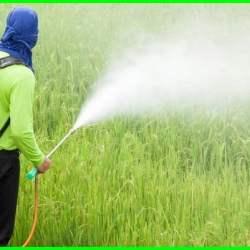 penyemprotan pestisida, jelaskan waktu penyemprotan pestisida yang tepat, cara penyemprotan pestisida yang benar, penyemprotan hama,teknik penyemprotan pestisida ,apd penyemprotan pestisida, alat semprot pestisida otomatis, jelaskan waktu penyemprotan pestisida yang tepat, cara penyemprotan pestisida yang benar, penyemprotan insektisida, semprot pestisida, teknik penyemprotan pestisida, penyemprotan pestisida, cara penyemprotan pestisida yang benar, cara penyemprotan pestisida