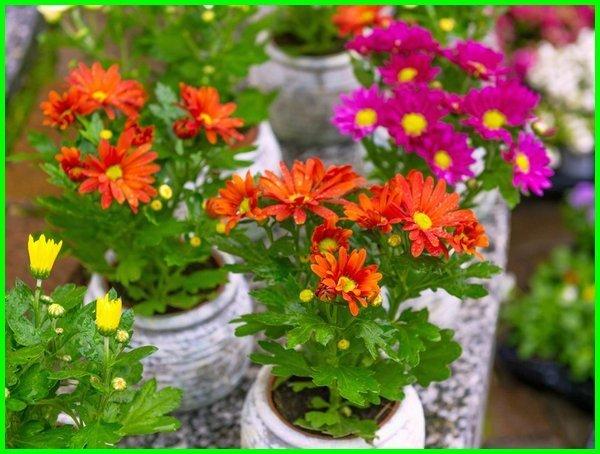 tanaman bunga yang bisa dimakan, bunga untuk dimakan, jenis jenis bunga yang bisa dimakan, edible flower bisa dimakan, bunga yang bisa makan, bunga yang dimakan, tanaman hias yang bisa dikonsumsi, tanaman yang bunganya bisa dimakan