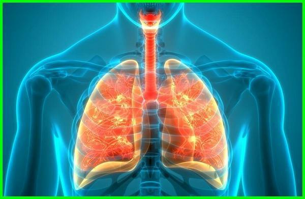 cara membersihkan lendir di tenggorokan dan paru-paru, cara membersihkan paru-paru, cara membersihkan paru-paru dalam 3 hari, cara menghilangkan paru paru basah, cara membersihkan paru paru dari dahak, cara membersihkan paru-paru dari dahak, cara membersihkan paru-paru dengan bawang putih, cara mengolah kunyit untuk membersihkan paru-paru, cara membersihkan paru-paru dengan susu bear brand, bagaimana cara menghilangkan cairan di paru paru, cara menghilangkan paru paru basah dengan cepat