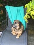 A very companionable dog