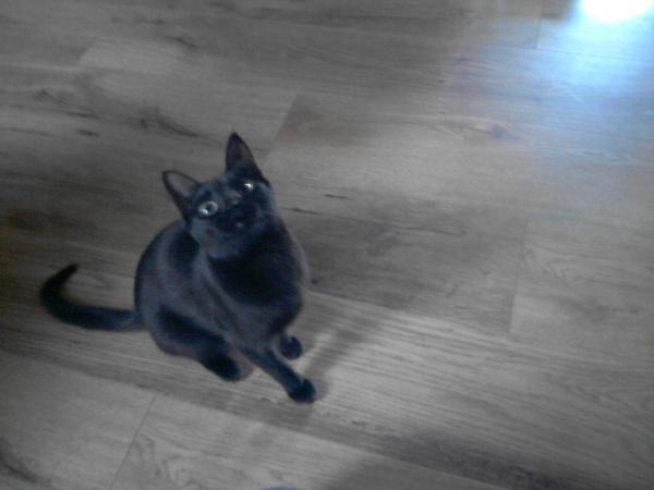 schwarze Katzen ***Neues aus der Hexenküche***