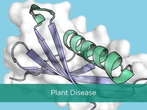 Plant Fungal Disease