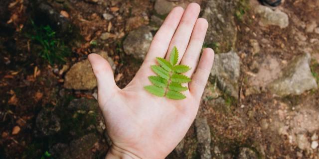 Mão a segurar numa folha verde