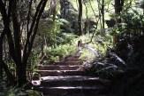 Blue-Mountains-Botanic-Gardens-26
