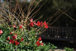 Blue-Mountains-Botanic-Gardens-44