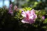 Blue-Mountains-Botanic-Gardens-6