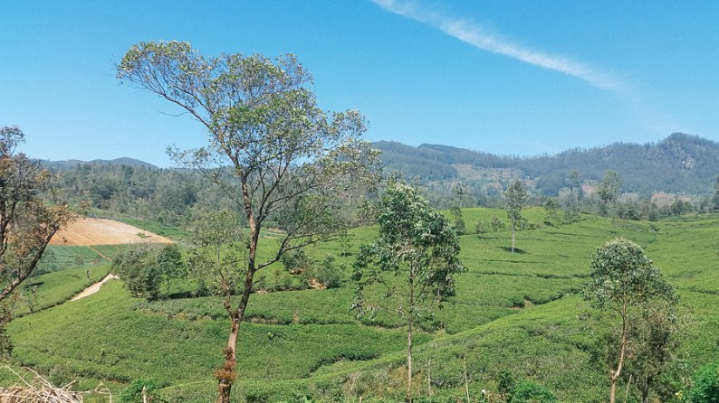Nuwara Eliya Tea Plantations | Sri Lanka