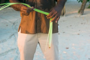Maldives Kurumba Art Romance Palm Bird