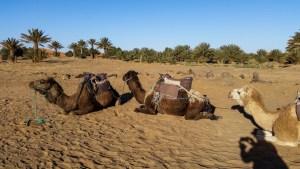 Morocco | Sahara Desert | Camel Trekking | Camping