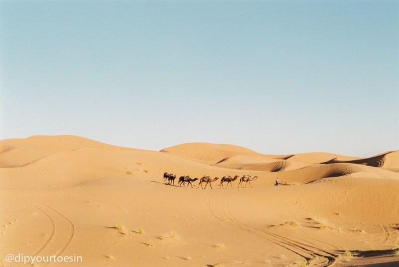 Sahara desert | Camel trek | Erg Chebbi | Morocco