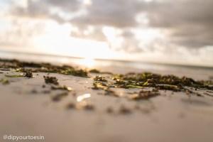 Seaweed at Hakuna Majiwe in Paje, Zanzibar | @dipyourtoesin