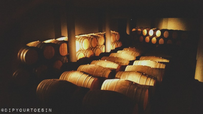Wine Cellar Sandeman Douro Valley | Why you should visit Porto