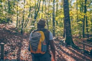 Omo walking among beech trees in the forest of La Fageda d'en Jordà practising mindfulness