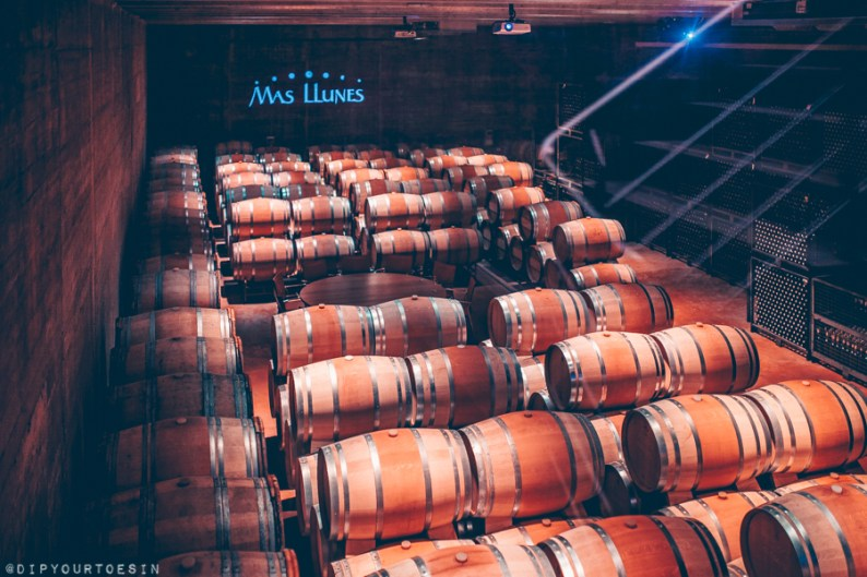 French oak barrels storing wine in cellar at Mas Llunes winery, DO Empordà