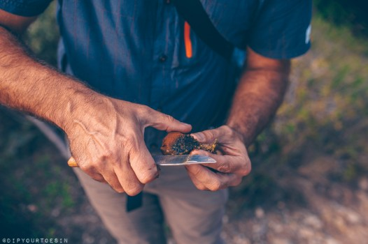 Evarist March cutting wild mushroom | NaturalWalks along Costa Brava's Coastline