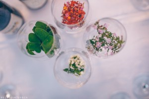 Wine glasses with natural herbs in Costa Brava