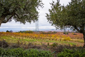 Vineyard at Bodegas Finca de Los Arandinos, Entrena | Visit La Rioja, Spain