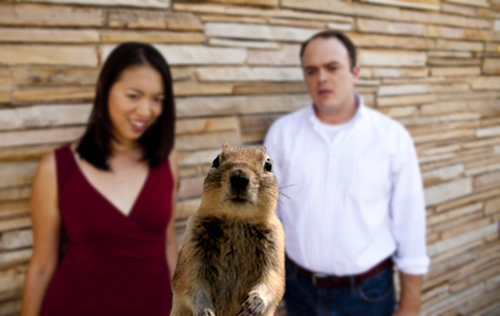 austin_squirrel _crasher-2