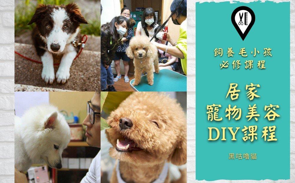 寵物美容 課程 DIY
