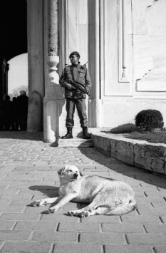 An armed guard of Turkish Military, and a sun-bathing dog