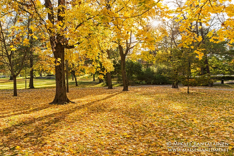 Dicas Outono Helsinki Finlândia, Ruska Suomi, Autumn Tips Helsinki Finland, kaivopuisto