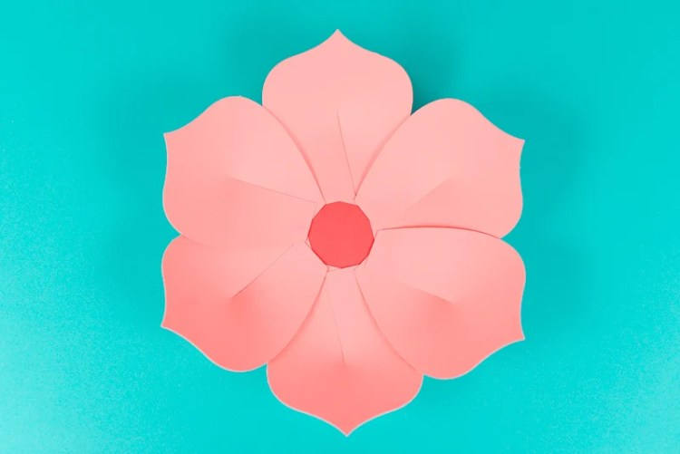 First layer of petals