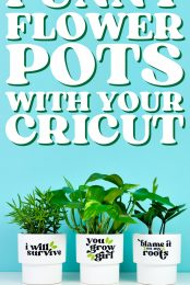 Funny Flower Pots with your Cricut pin image
