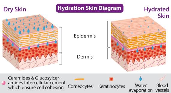 hydration_skin_diagram.jpg