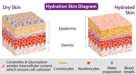 hydration_skin_diagram.jpg