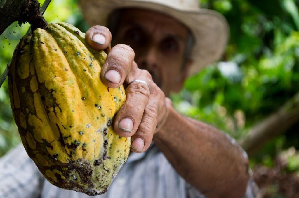 fair-trade, direct-trade, chocolates, coffee