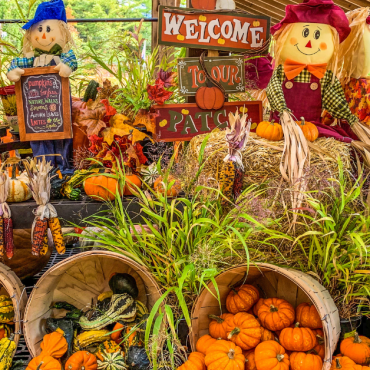 Five Festive Spots to Get Your Pumpkin in Stamford
