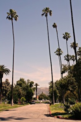 Loving the tall Cali palms and the Hollywood sign in the distance.