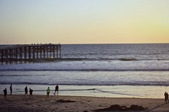 beach whole