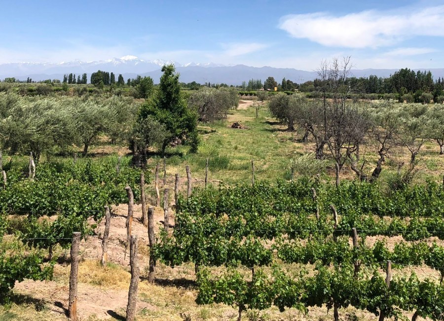 Maipu scenery at MEVI vineyards