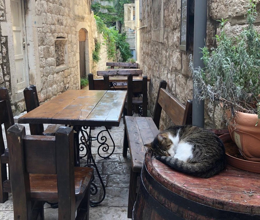 Cat napping in Korcula. Slow island life.
