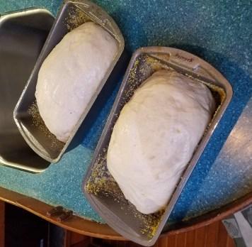 Dough ready to bake.