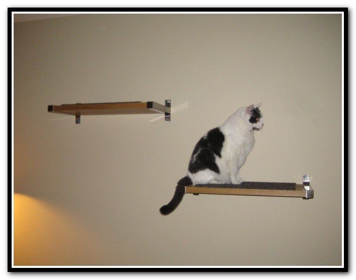 Floating Shelves For Cats