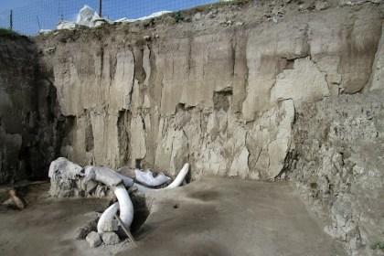 Les ossements d'au moins 14 mammouths découverts au Mexique