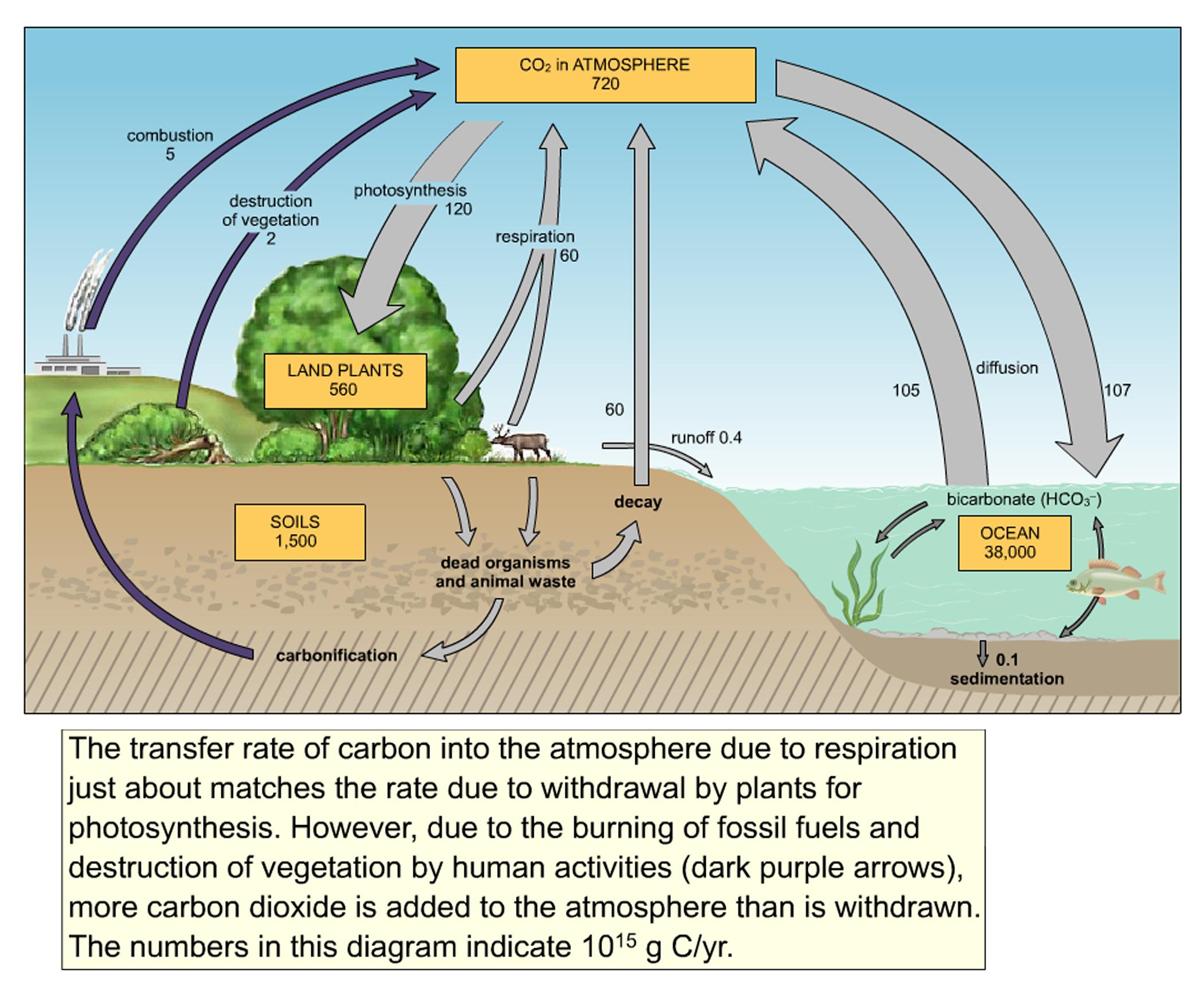 Pin Nitrogen Cycle