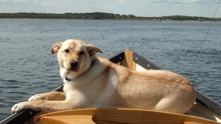 """""""the shaggy dog that likes so well to sit in a boat and watch the water as it plashes by, makes me wonder sometimes if he would not want a nicely cushioned naphtha launch if he could make out how to get one."""" (Henry George, Science of Political Economy) (image credit: Greg B (cc) via Flickr)"""