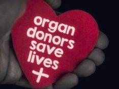 A reminder of the importance of blood and organ donation. Hands holding a heart with a message that reads: Organ donors save lives.