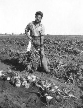 Joe working the sugar beet fields in Alberta during his WW II internment as a Japanese Canadian. (Tsukamoto Family Collection)