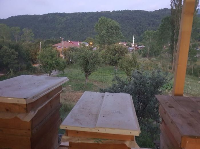 bal evi ve köy